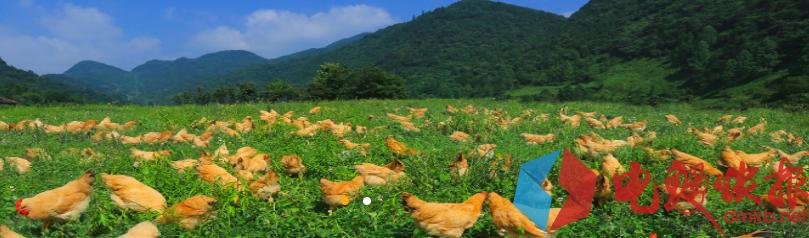 湘佳牧业半年报数据抢眼 资本助力高速发展心系扶农助贫